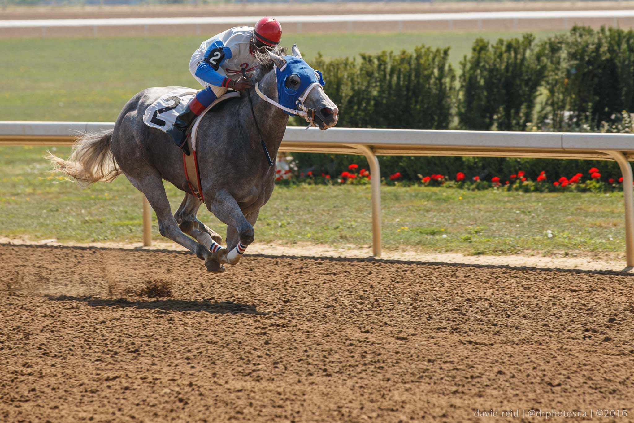 Winning photo from Ajax Downs