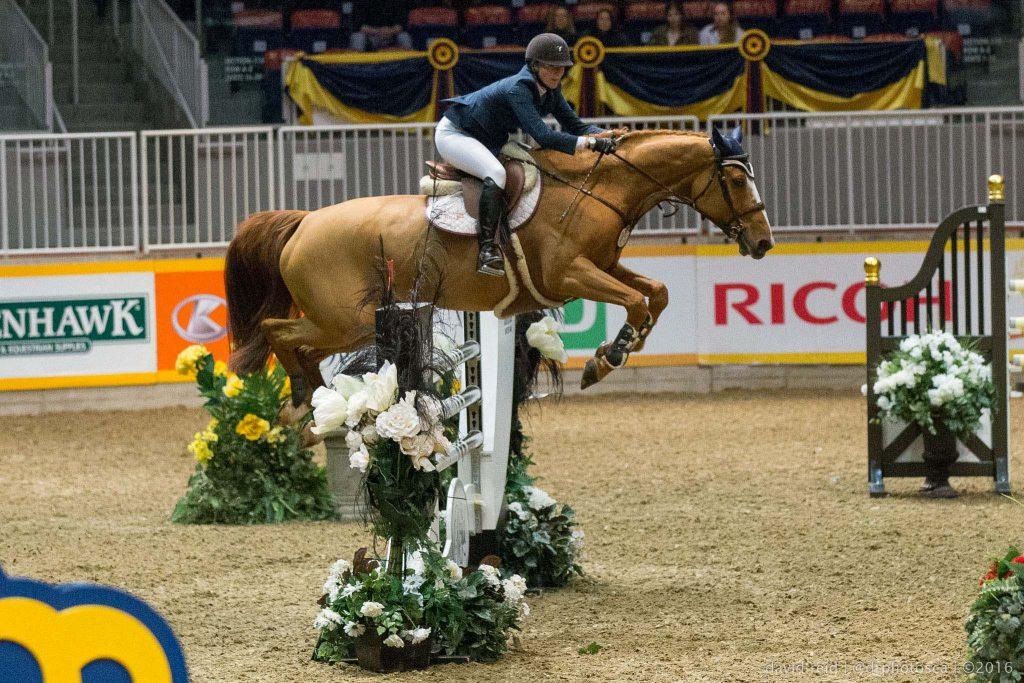 The Royal Horse Show photographer David Reid