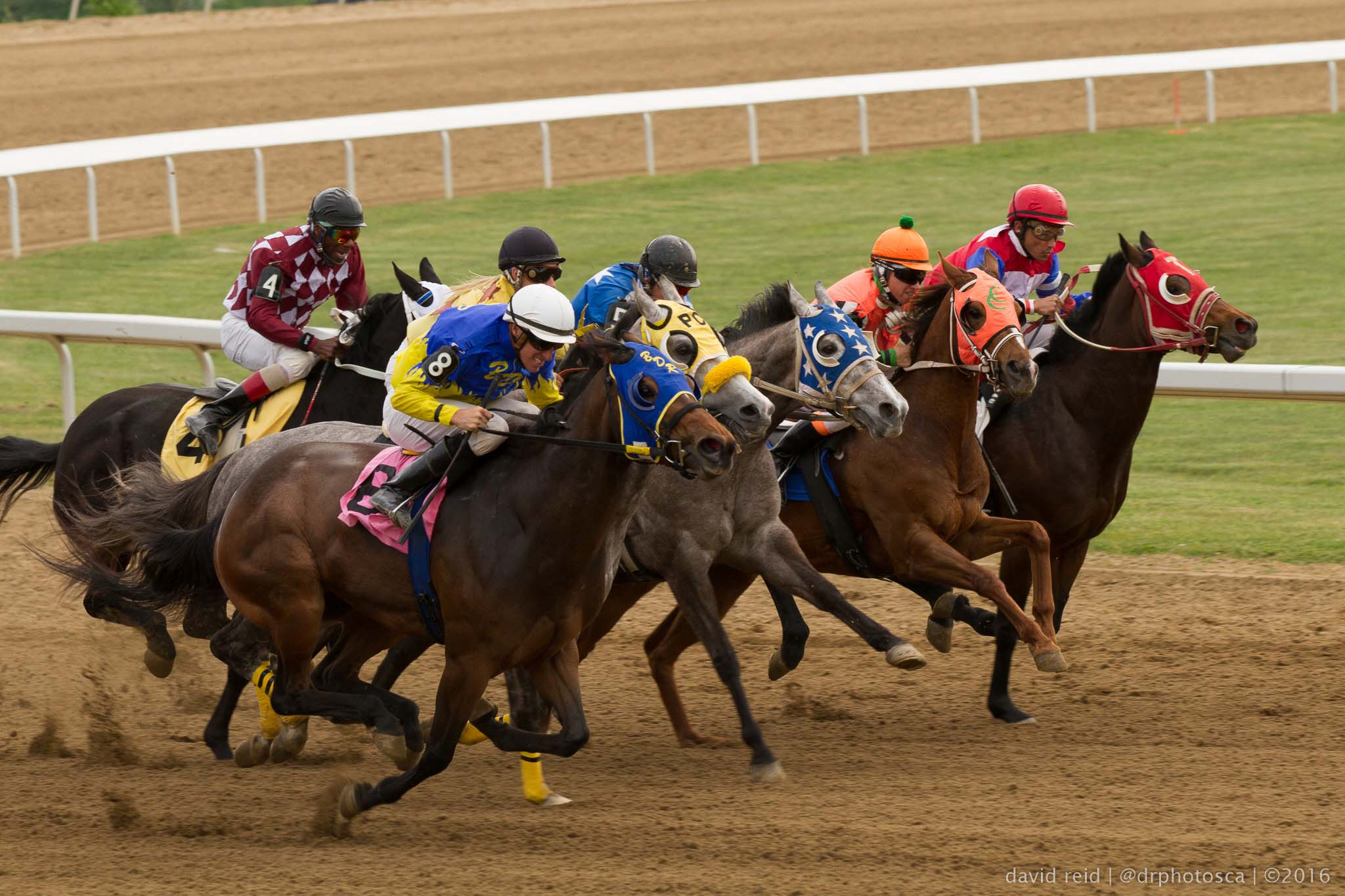 Quarter horse racing photographer David Reid