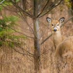 The challenge of nature photography when you're not in the wild