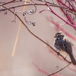Simple tips for bird photography in the spring