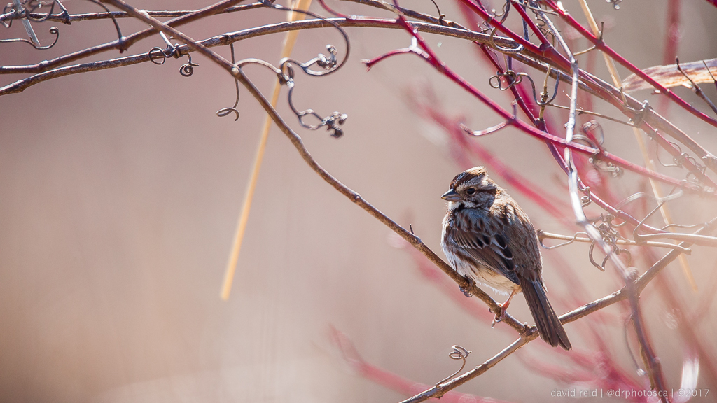 Photo of a bird taken on a Canon DSLR with photo tips for better images.