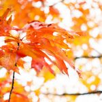 5 fall photography tips and techniques to improve your photos