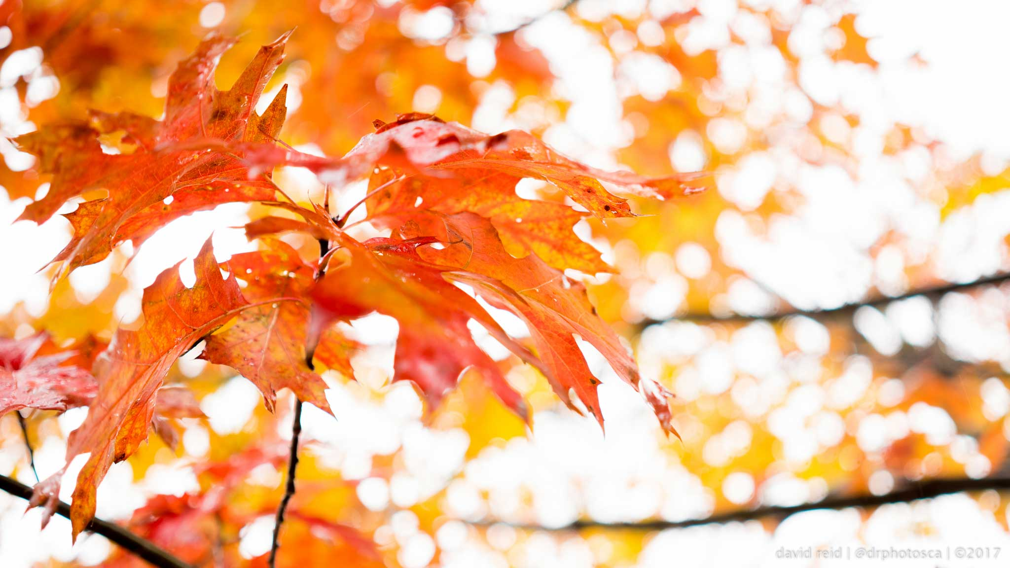 Learn how to take better fall photos