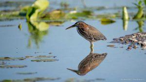 Reflection of bird taken with birder camera