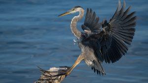 SONY bird photography lens