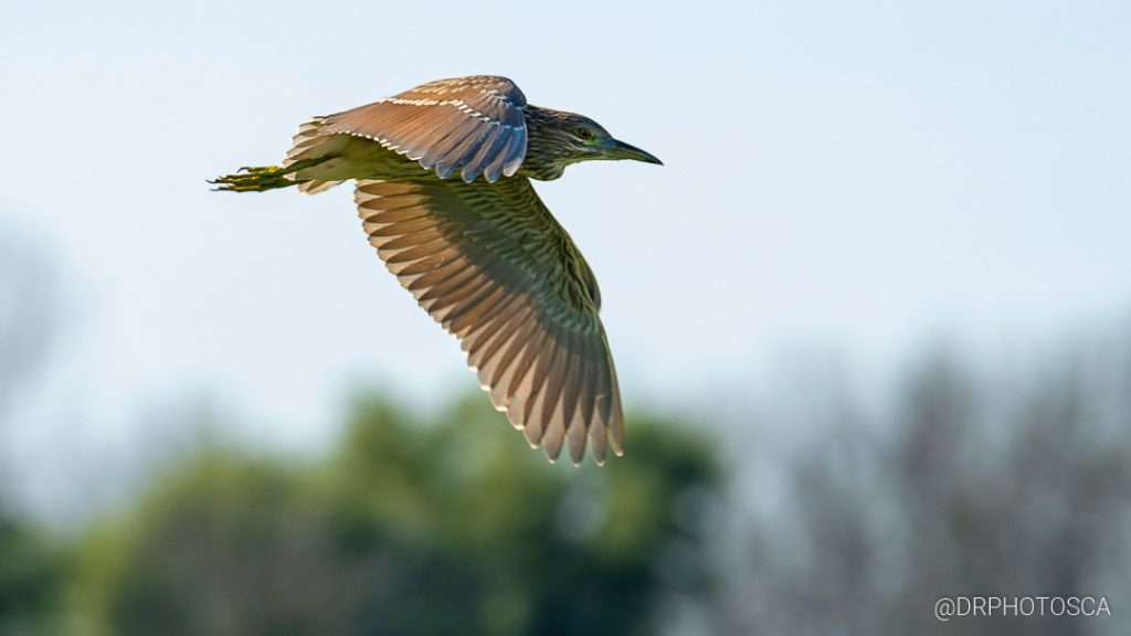 Capture birds in flight with this Bird photography lens