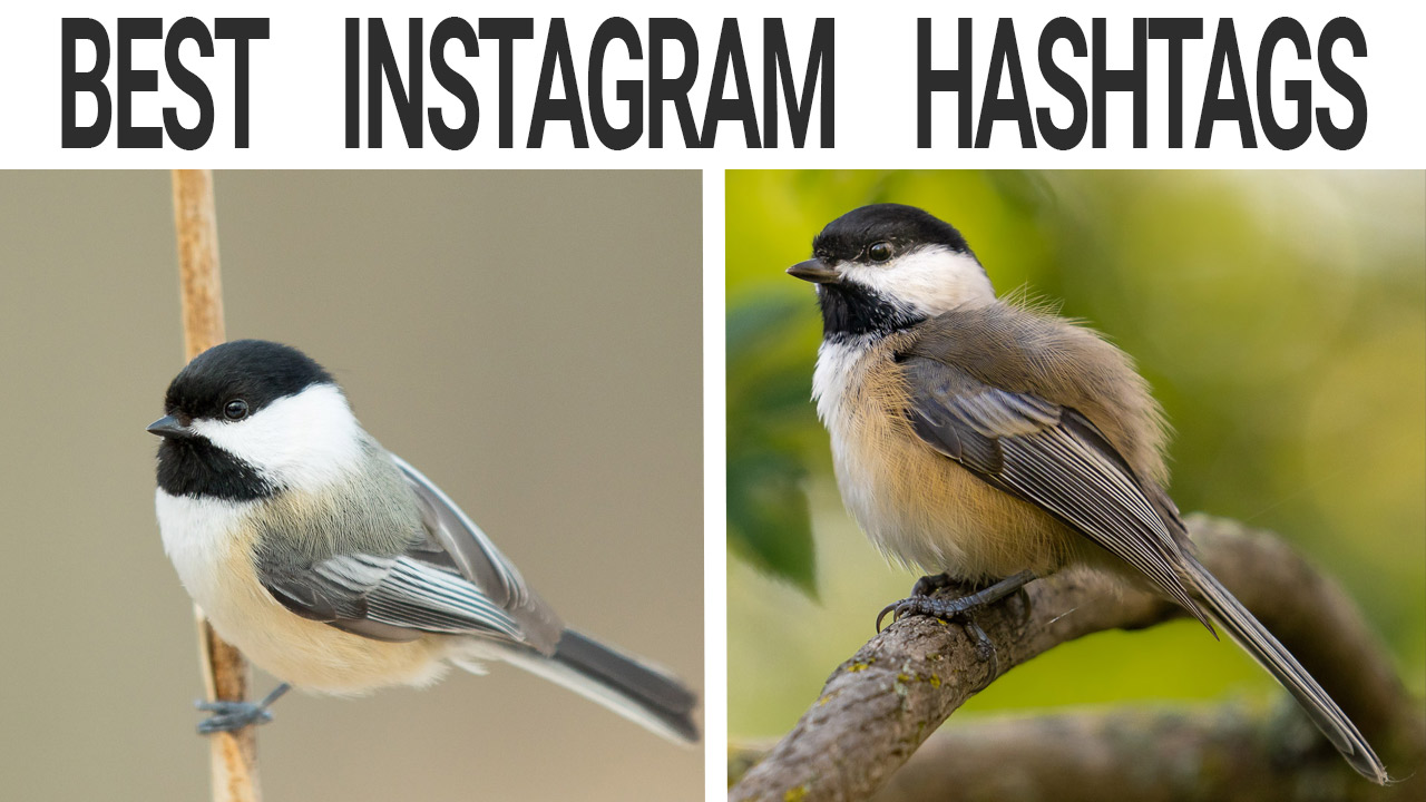 New Instagram hashtags for bird photographers and how to increase fan engagement